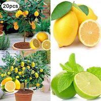 20x Lemon tree Graines Heirloom Jardin Arbre extérieur Fruit intérieur Rare Organic Seed