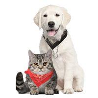 قابل للتعديل pet وشاح طوق العنق الكلب باندانا مثلث وشاح الياقات الحيوانات الأليفة القط جرو الياقات الأزياء الكلب القلائد الملحقات الحيوانات الأليفة