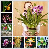 300 pcs flores Orquídea rara, orquídea rara Bonsai Mix plantas macaco sementes face flor planta flor crescimento Natural Mix Bonsai para casa