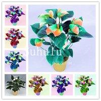 Schlussverkauf! 100 stücke Mix Anthurium Bonsai Pflanzen Samen Schöner Regenbogen Anthurium Garten Blumen Hohe Überlebensrate Bonsai Baum Garten Dekor