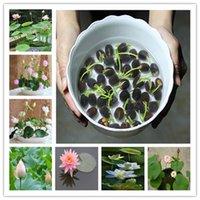 15 Pcs/bag bowl lotus water lily seeds rare Aquatic flower Perennial Plant bonsai for home garden shipping/ lotus bonsai