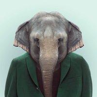 Elephant Head pleine Drill bricolage 5D ronde strass diamant broderie peinture Croix Cheval Kits point Mosaice d'ornement
