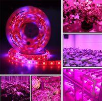 DC 12V LED 성장 가벼운 스펙트럼 5m LED 스트립 빛 5050 LED Phyto 식물 성장 램프 온실 수경 공장 성장