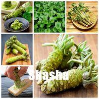 200個の素早い植物の種子日本の西洋ワサビ盆栽野菜DIY植物植物植物植物のための植物のための野菜と鉢植えされた新鮮な植物