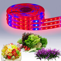 LED 성장 빛 스트립 LED 식물 재배 빛 12V 레드 블루 방수 빛 온실 수경 공장 성장 램프 1 M 60 LED