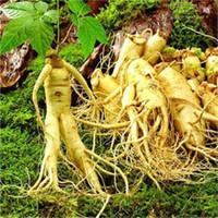 100 st / lot frön Varm försäljning! Kinesiska Ginseng, Panax Ginseng Flores, Potted Bonsai Växtblomma Plantas för hemträdgård Lätt att växa