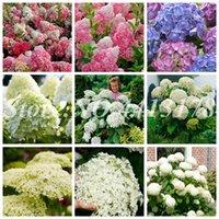 Couleurs multiples choix Hydrangea Bonsai vivace Fleur Hydrangea Balcon ornement Fleurs, Jardin des plantes Bonsai 100Pcs Graines