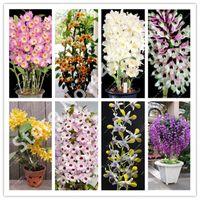 1000 PCS Dendrobium Orchid Flower Bonsai, planta de flores de interior, Pétalos Doble Bonsai Flowers Semillas Planta DIY Home Garden, purifique el aire