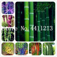 50 PC 희귀 색 대나무 분재 씨앗, Outderdoor 장식 정원, 중국 허브 재배자 Bambu 나무 분재 고품질 가정용 식물