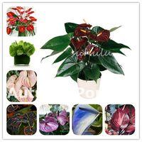 1000個の珍しいAnthuriumの花の植物の種子屋内盆栽バルコニー鉢植えの植物の植物の植物の花庭のための庭の花の花咲く