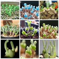 200 pcs / sacs graines rares succulentes mini lotus lithops Pseudotruncultitella Pot Fleur Chairy Bonsaï Plante jardin Facile grandir