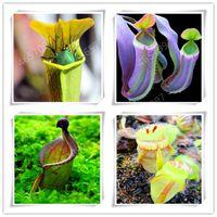 300 개하는 Dionaea Muscipula 자이언트 클립 금성 파리통 분재 씨앗 화분 식충 식물 분재 딱새 정원