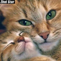 """Zhui Звезда полный квадрат дрель 5D DIY Алмаз живопись """"животное кошка"""" 3D Вышивка Крестом мозаика набор домашнего декора подарок VIP"""