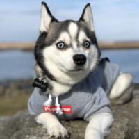 Francês Roupa Buldogue Dog Hoodie Pupreme Quente Retro Sport Dog Hoodies roupas para cães filhote de cachorro Pugs roupas de cachorro Chihuahua Y200330