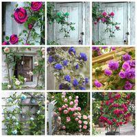 Горячая распродажа! 500 шт. Редкие розовые дерево Bomsai семена растения цветок мини-альпинистские розы мини-красочные бонсай розовый цветок горшечник для дома сад