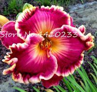 100 шт Семена свежие Hemerocallis Middendorffii лилейник бонсай день Лилии многолетнее цветочное растение многоцветное, чтобы выбрать красоту вашего сада
