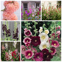 200 개 / 가방 씨앗 더블 hollyhock 야외 피는 아열대 분재 화분 althaea rosea 꽃 식물 집 정원 장식