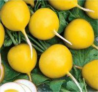 싼 500 PC 씨앗 맛있는 노란색 무 분재 야채 식물 정원 멜론 잃어버린 건강 과일 음식 꽃 냄비 재배자