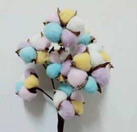60cm 23. 6in Colored cotton head colored cotton Dried flowers...
