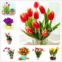 200 قطع الساخن بيع مصغرة توليب الزهور بونساي بذور نباتات الزنبق نباتات زهرة النباتات العطرية جميلة للمنزل والحديقة (لا توليب لمبة)
