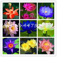 Venda quente 30 pcs por pacote tigela lotus Bonsai sementes hidropônicas plantas plantas aquáticas flor Bonsai pote lótus lírio lírio jardim bonsai