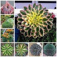 200 piezas / bolsas Semillas Bonsais Aloe Cacti Agave Raras Suculentas PLANTAS INTERIOR PLANTA AGAVE-Americana Potted Plantas para la siembra de jardín de casa