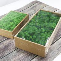 Planta verde artificial DIY creativo de secas falso Musgo de reno hogar de la flor del banquete de boda de la guirnalda del jardín decoración de la pared Mini Accesorio