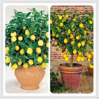 100pcs Speisefrucht, Zitrone, Bonsai, Bonsai Lemon Tree Frische Pflanzen Frucht-Gemüse-neue Ankunfts-Garten-Bonsai Pflanzensamen drop