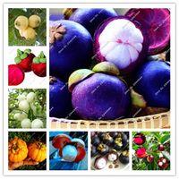 20個/バッグフルーツクイーンパープルタイMangosteenシードホワイトミートフード熱帯フルータ野菜ガーデン盆栽花鍋
