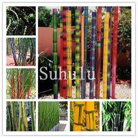30 PC 희귀 긴 대나무 분재 씨앗 장식 가든 Bambusa ventricosa 분재 허브 식물 DIY 홈 정원 신선한 공기 Hardy 거인