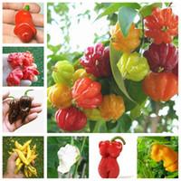 200 개 / 가방 씨앗 여러 가지 빛깔의 고추 뜨거운 고추 샘플 발코니 장식 미니 정원 장식 분재에 대 한 슈퍼 칠리 야채 식물