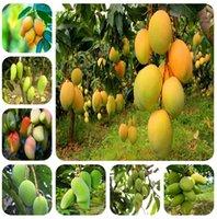 輸入された種子1ピース100%真マンゴー植物非常に美味しい健康的な緑のフルーツ盆栽家庭園の植物のための非常に簡単な成長送料無料