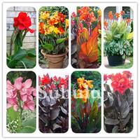 200 PC를 / 가방 다채로운 칸나 백합 꽃 분재 씨앗 DIY의 화분을 실내 식물 야외 혼합 색상 블루밍 가든 꽃 란타