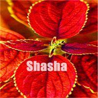 뜨거운 판매! 300pcs / 가방 씨앗 Coleus Blumei Bonsai 희귀 Coleus Blumei 무지개 식물 분재 꽃 화분 DIY 선물