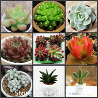 Wholesale Wholesale Indoor Succulents - High quality Superior Succulent Seeds Promotion!!! 24 Types 100pcs Rare Fower Seeds for Garden Home & Garden Flores indoor Plant