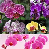 Wholesale flower seed mixes resale online - New Rare Mix Color Phalaenopsis Flower Seeds Bonsai Plant Butterfly Orchid Home Garden Decoration