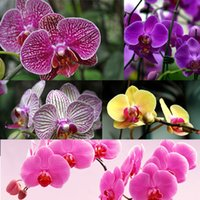 renk tohumunu karıştır toptan satış-Yeni Nadir 20 Adet Mix Renk Phalaenopsis Çiçek Tohumları Bonsai Bitki Kelebek Orkide Ev Bahçe Dekorasyon