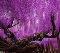 Wholesale Purple Sweet Seeds - Hot Sale Rare Purple Wisteria Flower Seeds for DIY home & garden plant Wisteria sinensis ( Sims ) Sweet seed 15PCS Free Shipping