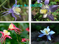 Organic blue bluebird - flower seeds Aquilegia viridiflora Bluebird Aquilegia seeds blue columbine about particles