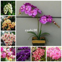 Wholesale orchid tree - Flower pots planters Butterfly orchid seeds phalaenopsis orchids seeds Bonsai plants Seeds for home & garden 200 seeds bag