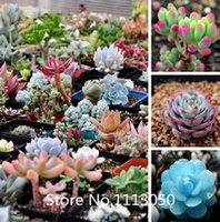 Wholesale Promotion Rare Mix Lithops Seeds Living Stones Succulent Cactus Organic Garden Bulk flower Seeds Novel Seed