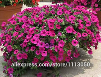 Wholesale Cheap Wholesale Bonsai - free shipping hanging petunia seeds,garden Petunia, Petunia Seeds, 100 seeds lot Cheap Bonsai plant