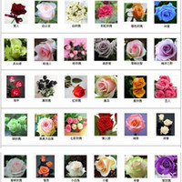 sementes de flores coloridas rosa venda por atacado-30 tipos Multi-cor Total de 300 sementes coloridas rose sementes de flores rare rainbow rose sementes de flores Planta Home Jardim bonsai