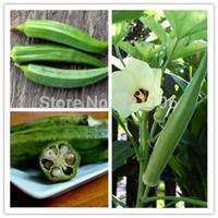 ingrosso semi di verdure trasporto libero-20 semi di