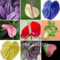 Wholesale Cheap Wholesale Bonsai - anthurium seeds, free shipping cheap anthurium seeds, Bonsai balcony flower, anthurium potted flower seeds - 100 pcs bag