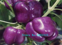 Wholesale Bell Peppers Seeds - 200pcs  bag Free Shipping purple Sweet Bell Pepper Seeds Vegetable Seeds seeds for home plant