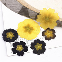 Wholesale Aroma Decoration - 2017 Primula Yellow   Black Real Pressed Flowers Resin Cell Phone Case For Aroma Candle Decoration Free Shipment 1 lot 100pcs