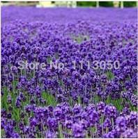 ingrosso semi di lavanda-Il trasporto libero 100 pz semi di lavanda semi di erba giardino balcone vaso quattro stagioni semi di fiori