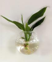 handblown artesana de vidrio floreros jarrones de pescado decoracin de casa jarrones de vidrio