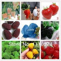 Wholesale Wholesale Seeds Fruits Vegetables - Vegetables and fruit seeds Strawberry seeds 100 pieces seeds of each color seeds grain Bonsai plants Seeds for home & garden